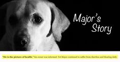 Those of us who feed our dogs a raw food diet can rattle off the benefits without much thought. But we sometimes forget where we came from … Major's story is a vivid reminder of why we do what we do. And if you're thinking of feeding a raw diet but haven't quite gotten there... Continue Reading
