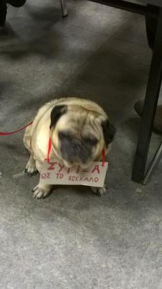 In other words... Κομματόσκυλο ! RT @CorinaVasilopou: Σύριζα ως το κόκκαλο. :-Ρ