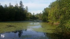 Fistrap Creek Park Located at 31580 Maclure Road, Abbotsford, British Columbia