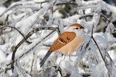 A little tree sparrow felt ornament pattern.