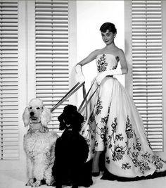 Audrey Hepburn e i suoi barboncini ♥  Follow the Poodle! ;)