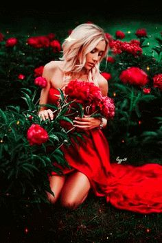 There are many beautiful roses!