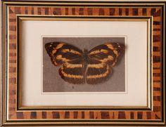 Opgezette vlinders in oude lijst - V0043