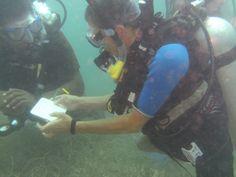 conch survey