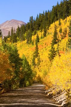 Boreas Pass Autumn Drive (Colorado) by Forrest Boutin / 500px