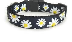 Daisy Dog Collar- Hadie