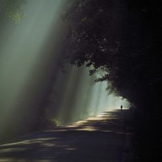 Silhouetted person on a lonely road in the forest | Murray Mitchell