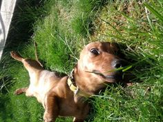Grass, check. Sun, check. Belly rub, oh there you are. Belly Rub!
