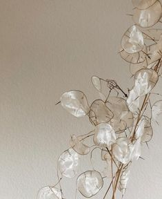"""The Lane on Instagram: """"Lunaria obsession.. see our guide to styling events with this magical bloom, plus the florists we recommend, now on thelane.com (link in…"""" Rose Gold Ribbon, Modern Wedding Flowers, Ethereal Beauty, Types Of Flowers, Natural Shapes, Dried Flowers, Color Inspiration, Flower Art, House Plants"""