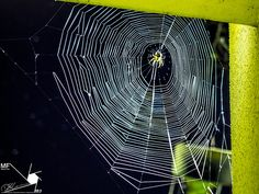Spiders-Web | by Munns Foto Spiders, Photography Photos, Nature, Hand Spinning, The Great Outdoors, Natural