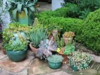 """Succulents """"give you such architectural interest"""" says Patti McGee, who has sprinkled containers of them throughout her Charleston garden."""