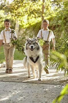 Playful Adventure Themed Wedding… with a Husky Ring Bearer! · Rock n Roll Bride Tent Wedding, Dog Wedding, Wedding Pictures, Fall Wedding, Dream Wedding, Wedding Ideas, Funny Jokes For Kids, A Husky, Yellow Wedding