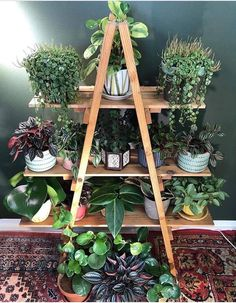 [New] The 10 Best Home Decor Ideas Today (with Pictures) - Peperomia family shelfie Photo: __ Inside Plants, Room With Plants, House Plants Decor, Plant Decor, Trendy Home Decor, Diy Home Decor, Indoor Garden, Indoor Plants, Porch Plants
