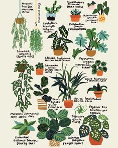 Hello plant lovers, or Image by House Plants Decor, Garden Plants, Indoor Plants, Shade Garden, Household Plants, Inside Plants, Plant Guide, Plant Drawing, Plant Art