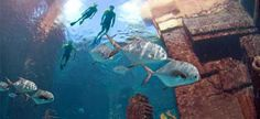 Swim with the Dolphins | Paradise Cay Bahamas | Atlantis Paradise Island