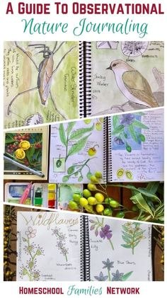 A guide to observational nature journaling - get started with nature journals with your children! Nature Sketch, Nature Drawing, Outdoor Learning, Home Learning, Artist Journal, Journal Art, Nature Words, Nature Study, Nature Nature