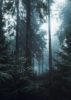 webcam - The World`s Most Visited Video Chat Magic Forest, Dark Forest, Landscape Photography, Nature Photography, Hansel Y Gretel, Merian, Nature Aesthetic, All Nature, Beautiful World