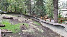 2018 Honeymoon Adventure - Short Video of Black Squirrel at Calgary Zoo Black Squirrel, Run Around, Calgary, Country Roads, Adventure, Youtube, Adventure Movies, Adventure Books, Youtubers