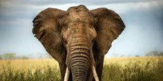 Urge The Wisconsin Legislature to Ban The Sale of Ivory and Rhino Horns To Protect Endangered Wildlife!