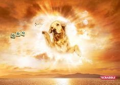 DOGS IN HEAVEN   you know there s a question i hear all the time matt i m an atheist ...