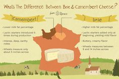 Never confuse brie and Camembert again by reading this handy guide about the similarities and differences between these two popular kinds of cheese. Kinds Of Cheese, Milk And Cheese, Baked Camembert, Camembert Cheese, Cheese Making Process, French Cheese, Raw Milk, How To Make Cheese