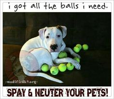 Spay & Neuter your pets!