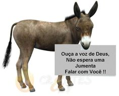 Animals, Php, Facebook, Being A Christian, Wisdom Words, Christ, Dios, Animales, Animaux
