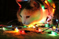 Cat.  New Year