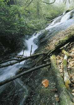 Waterfall Trail: Height: 75 feet Time to hike: 15 minutes Length of hike: 0.25 mile Difficulty: Easy Creek or river: Reedy Cove Creek in South Carolina