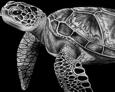 Image result for how to draw a realistic sea turtle