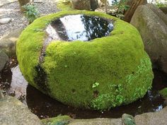 water vessel encased in moss  could use for fountain or with bamboo spout for water feature or as a bird bath......... ( 苔 )