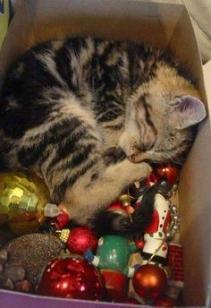And this is how christmas is done.....with lots of ....naps