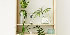 Pine wood and green plants - what a nice match!   Lundia Classic