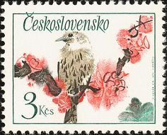 Birds on stamps: Czechoslovakia, Song Thrush Turdus philomelos
