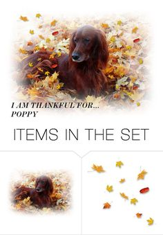 """""""I AM THANKFUL"""" by bainbridgegal ❤ liked on Polyvore featuring art and imthankfulfor"""