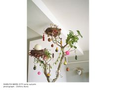 MUSUBI/青木むすび