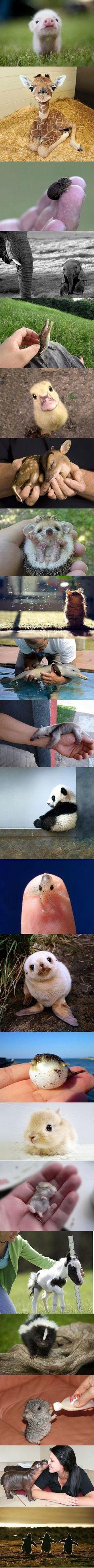 baby animals … so cute