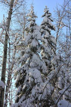 Winters Majesty by Jim Sauchyn