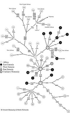 Detailed phylogeny of the human mtDNA haplotypes. From Vincent Macaulay and Martin Richards. Please cite both if you use this source.