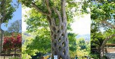 » Man Spends 40 Years Bending Trees into Mesmerizing Works of Art - Woodworking Crazy