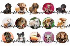 Puppies Bottle Cap Images