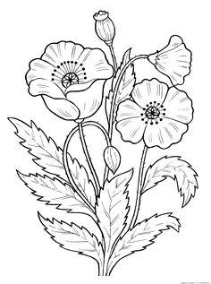 Раскраска Мак. Раскраска Раскраска мак растения скачать для детей раскраску мак