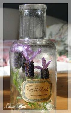 lavender terrarium in a bottle