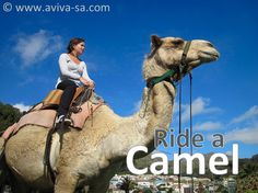 African Transport Experiences: 4 Animals You Can Catch a Ride On In Cape Town – Cape Town Tourism Cape Town Tourism, Provinces Of South Africa, Cape Town South Africa, Volunteer Abroad, Camels, Wine Country, Travel Around The World, Unique Art, Places To See