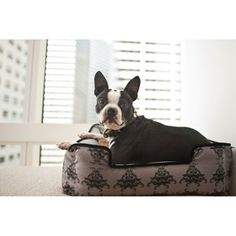 Crate Ideas Dog Bed Royal Crest