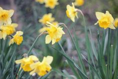 earworm and plum pudding: looking for spring