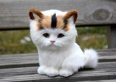 Unusual Adorable Cat