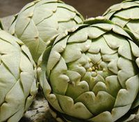 What are the Health Benefits of Artichoke? Prevents Infections, Cancer prevention, Increased bile flow, Liver ailments, Hangover treatment, Better digestion, Cholesterol reduction. This plant is rich in fiber thus helps in easy digestion and maintains cholesterol levels.