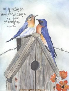 "Shawna Wright Art - ""In quietness and confidence is your strength... Isaiah 30:15 watercolor painting western bluebirds birdhouse"