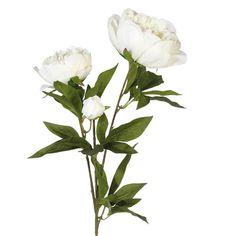 Faux Peony Duchesse de Nemours Flower Stem - White £8.50